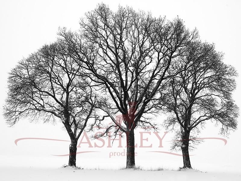 Фотообои дерево фото